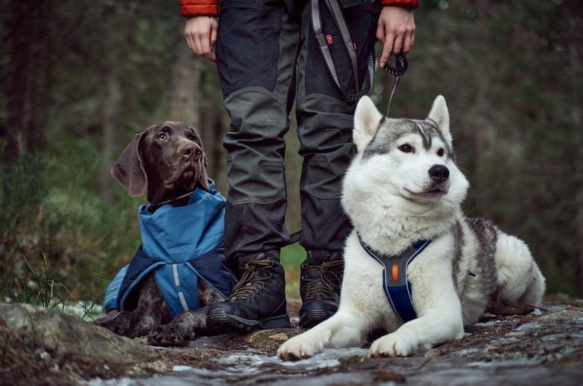 Case study Non-stop dogwear